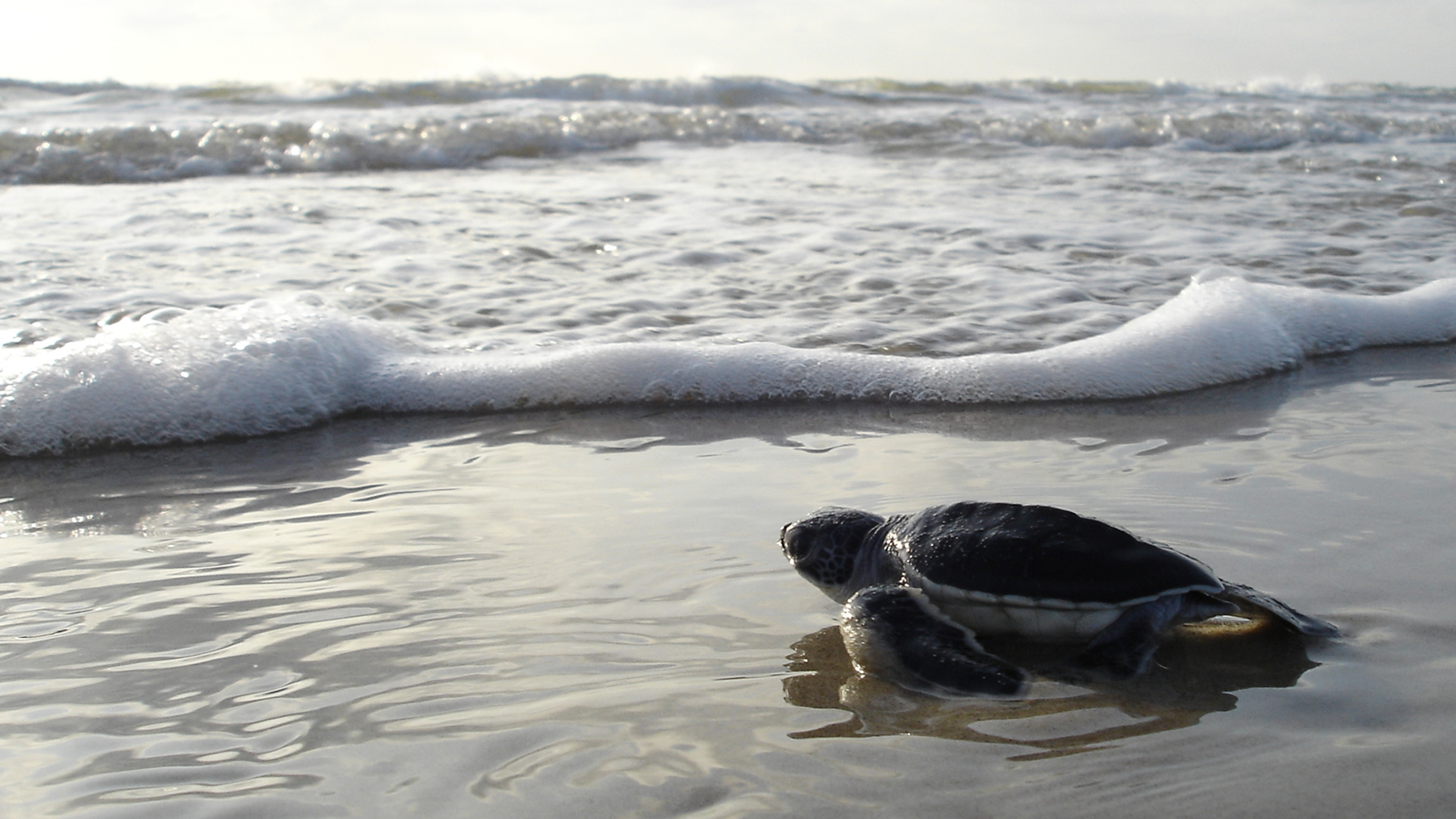 <h4>OUR OCEANS</h4><h5>Goal: We must protect our oceans and marine life by stopping offshore drilling and supporting marine protected areas.</h5><em>NPS Photo</em>